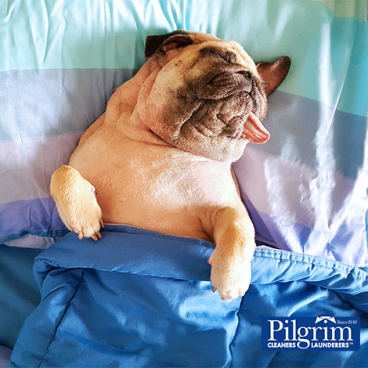 Happy First Day of Spring! Start Your Spring Cleaning By Bringing In Your Blankets & Comforters!